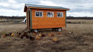 free range chickens working hard to produce your farm-fresh eggs