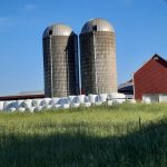 Round bales stacked in the farmstead